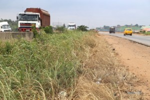 Weeds on the road at Magboro