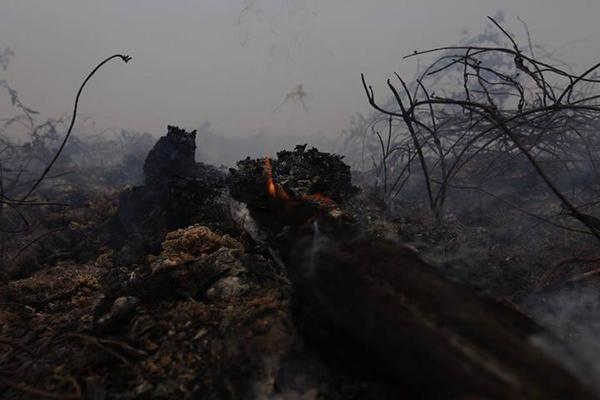 Indonesia forest fire. Photo: Greenpeace