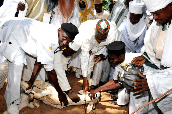President Buhari, middle, slaughters a ram