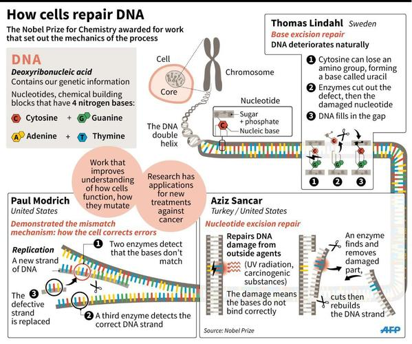 Graphic: How DNA fights cancer