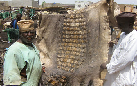 leather tanning in Nigeria