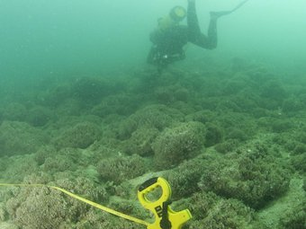 The UAE coral reefs today, depleted of fish