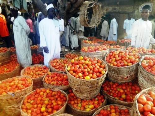 Kano's tomato traders now have a ready market