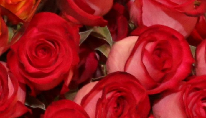Roses: may your love bloom like this flower!
