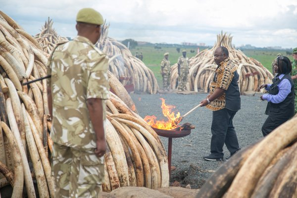 A Kenya official lights the pile of ivory