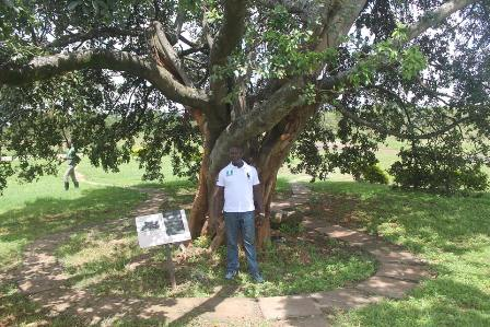 I am standing under the Uhuru tree planted by The Hon Mzee Jomo Kenyatta, M.P. Prime Minister of Kenya at the site where the Kenyan National Flag was first raised on December 12, 1963