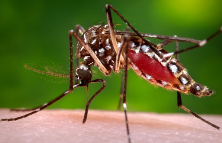 Mosquito which distributes malaria can be eliminated through: fumigation, larvicide and sterilization