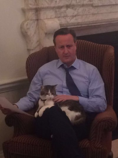 David Cameron with the cat  belonging to 10 Downing Street