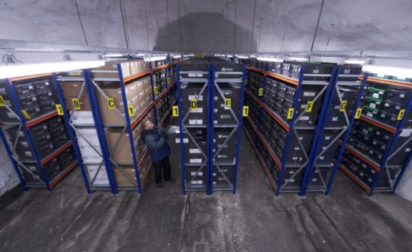 All samples are currently housed in room 2 of the Seed Vault. This room is about 90 feet long, 30 feet wide and 15 feet tall. Chiseled out of solid stone, it lies about 130 yards inside the mountain from the entrance. (Jim Richardson)
