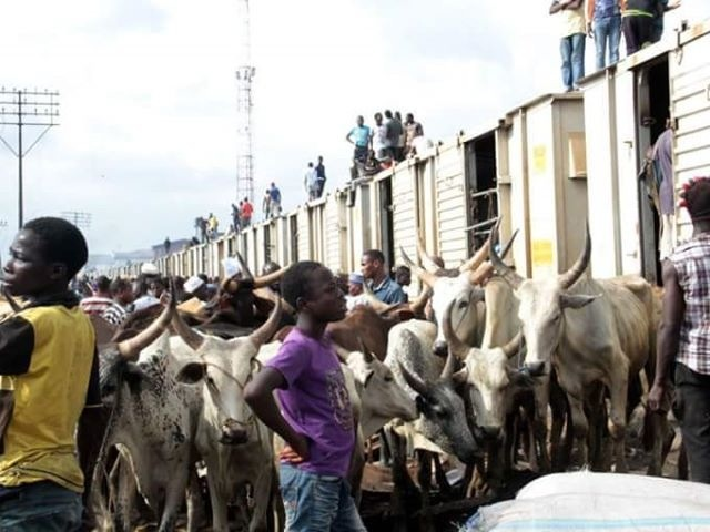 The cows moved by rail from North to South