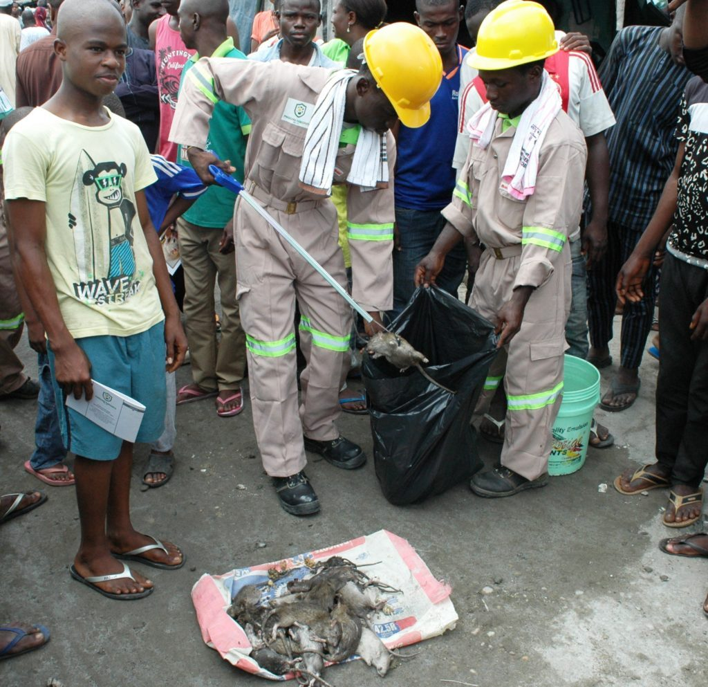 Officials of Phosguard Fumigants Ltd. demonstrate evacuation of dead rats at the flag off of LASG's Vector Control Programme