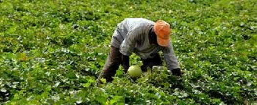 A farmer working on his farm: Many farmers in the Northwest have abandoned their farms as a result of insecurity